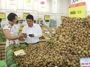 越南山萝省马江县首次向中国市场出口龙眼