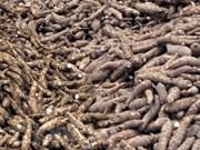 今年前7个月越南木薯出口量有所下降 出口额竟呈增长