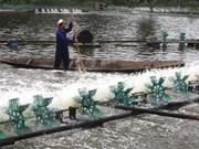 2011年越南部分养虾基地要进行编号和公开来源