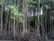 越南将加强可持续森林管理工作