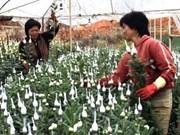 越南扩大鲜花出口市场