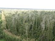 越南加强特用林保护工作