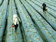林同省与比利时东弗兰德省发展蔬果领域