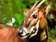 德国向越南森林生物多样性保护项目提供援助