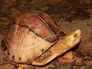在郎边高原发现南方黄额盒龟生活环境