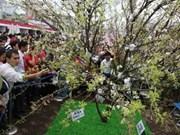 日本Genki樱花节在河内举行