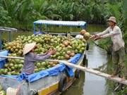 出口椰子原料将征收3%税率