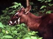 第二次国际索拉羚保护研讨会在承天-顺化省举行