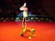 越南杂技团在2011年Circuba国际夏季杂技比赛获大奖