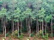越南重视发展与扩大森林覆盖率