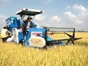 至2020年越南水稻种植面积维持在380多万公顷