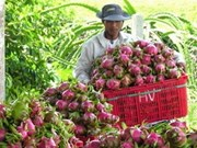 加强对出口蔬果的检验检疫工作