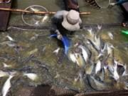 九龙江三角洲:2012年水产养殖面积增至79.5万公顷