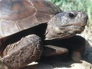 83只珍稀乌龟被放回西宁省国家森林公园
