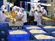 越南腰果产业力争2012年出口额达15亿美元