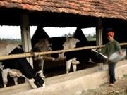 2012年越南国际畜牧与奶业展览会在胡志明市举办