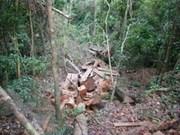 越南注重森林保护与发展工作