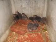 越南林同省:释放数十只野生动物回归大自然