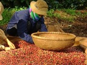 越南向印度尼西亚出口金额猛增