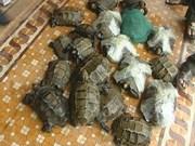 珍惜海龟在广南省占岛发现