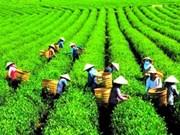 2012年越南林同省茶叶文化周正式开幕