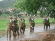 越南得乐大象群急需保护