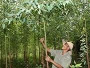 越南注重提高林业产品质量