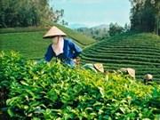 越南太原省新疆乡春天茶香节正式开幕