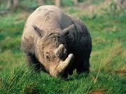越南与南非合作保护濒危犀牛