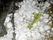 越南北部多省遭龙卷风冰雹袭击
