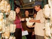 阮善仁副总理:职业培训与就业创造并行 提高农村劳动者收入