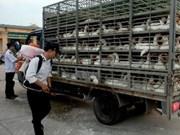 越南政府总理要求加强甲型H5N1、H7N9禽流感疫情防控工作