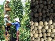 越南致力于提高胡椒质量 增加胡椒出口额