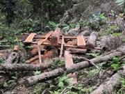 越南农业与农村发展部注重化解森林资源保护与开发工作中困难