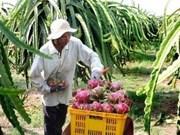 新西兰协助越南发展火龙果种植与出口计划