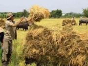 越南九龙江三角洲提升大米在国际市场上的竞争力
