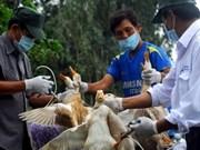 越南呼吁国际组织协助预防甲型H7N9禽流
