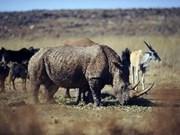 越南与南非签署生物多样性保护行动计划