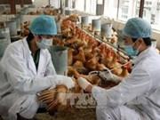 越南做好家养燕鸟禽流感病毒防控工作