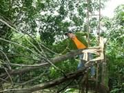 越南2号台风致使严重经济损失