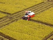 阮晋勇总理:朝着大规模商品生产方向发展九龙江三角洲地区农业经济