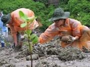 越南与日本大学生参加下龙湾红树林植树活动