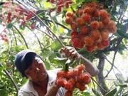 越南南部集中扩大主力果树种植面积