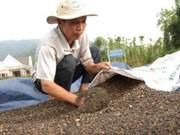 7月份同奈省胡椒出口量达5500吨
