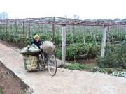 河内市农业新貌