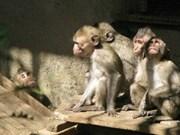 越南将70只食蟹猴放回大自然