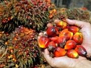印尼棕榈油对巴基斯坦出口额2014年起将激增