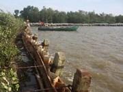 越南金瓯省采取多项措施 应对气候变化和海平面上升