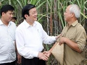 越南国家主席张晋创莅临高平省调研