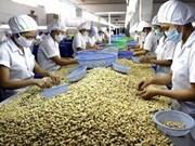 越南继续保持世界第一腰果出口国地位